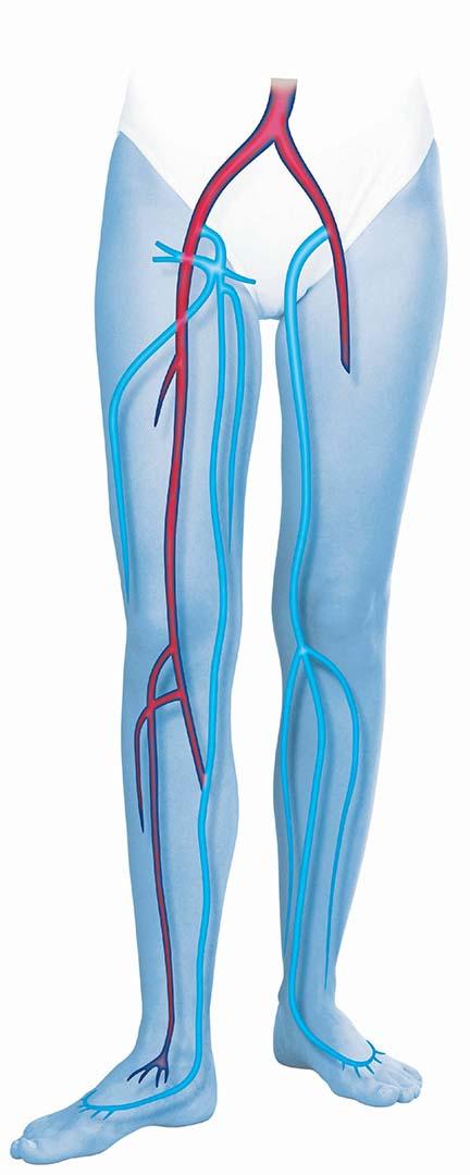 Leg Health - Jobst